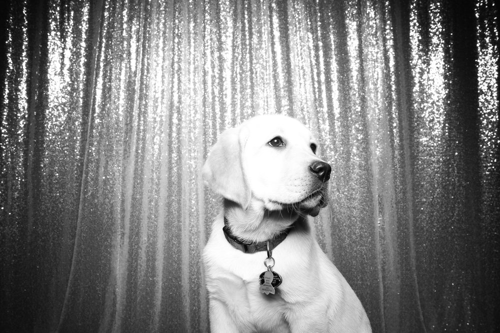 Dog_Friendly_Photo_Booth_Chicago_06.jpg