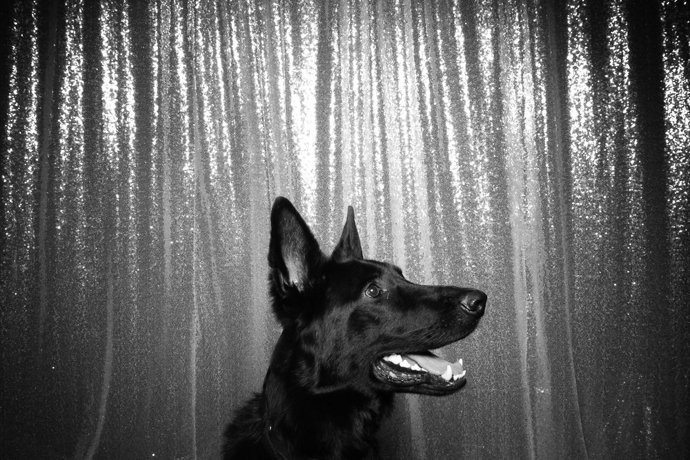 Dog_Friendly_Photo_Booth_Chicago_09.jpg
