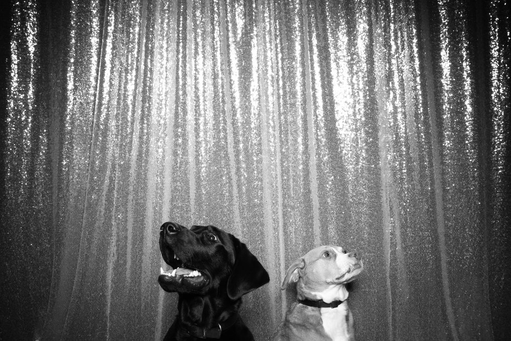 Dog_Friendly_Photo_Booth_Chicago_11.jpg