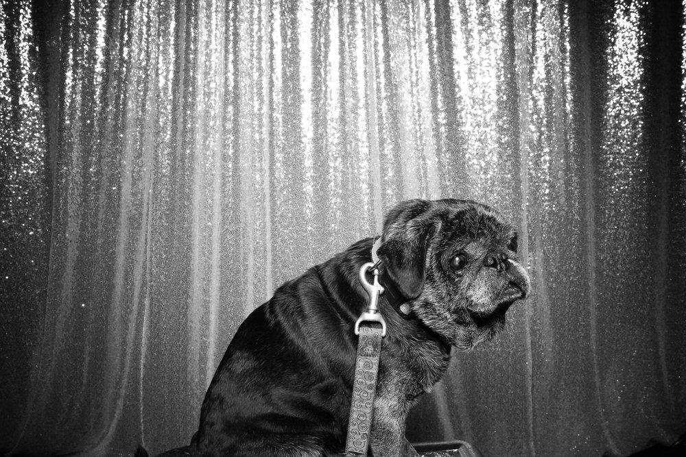 Dog_Friendly_Photo_Booth_Chicago_20.jpg