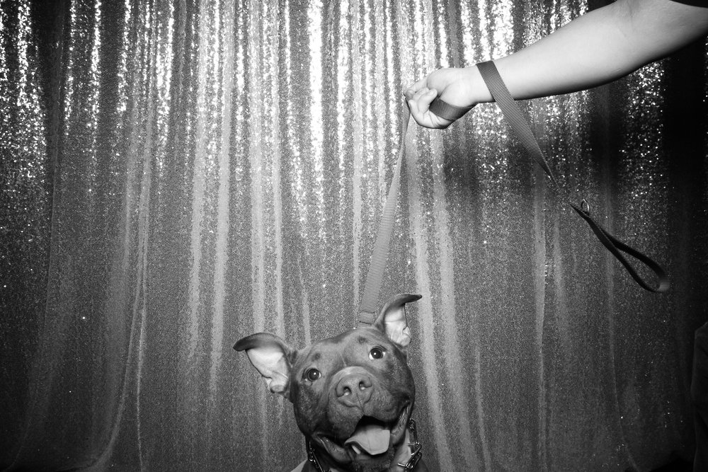 Dog_Friendly_Photo_Booth_Chicago_24.jpg
