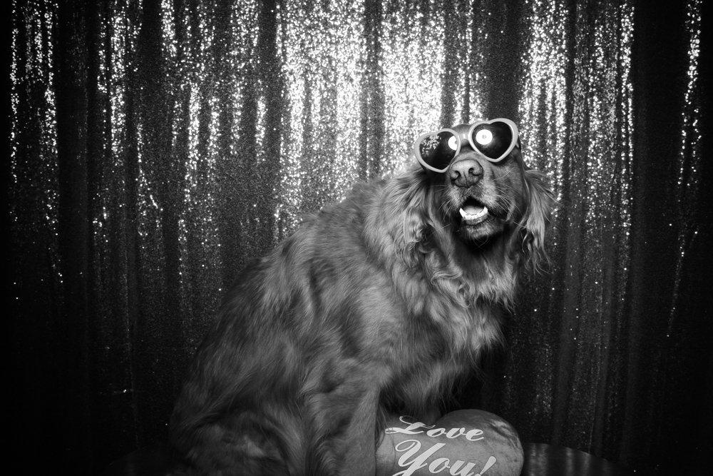 Chicago_Vintage_Photobooth_Valentines_Day_Dog_18.jpg