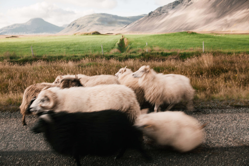 Iceland_Day3-50.jpg