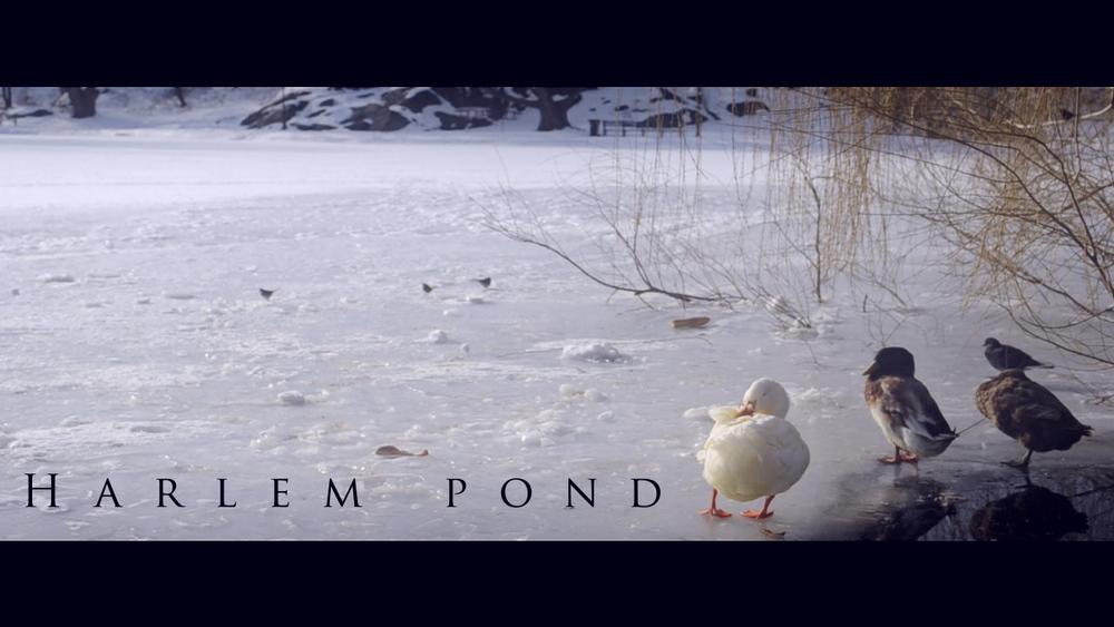 Harlem Pond