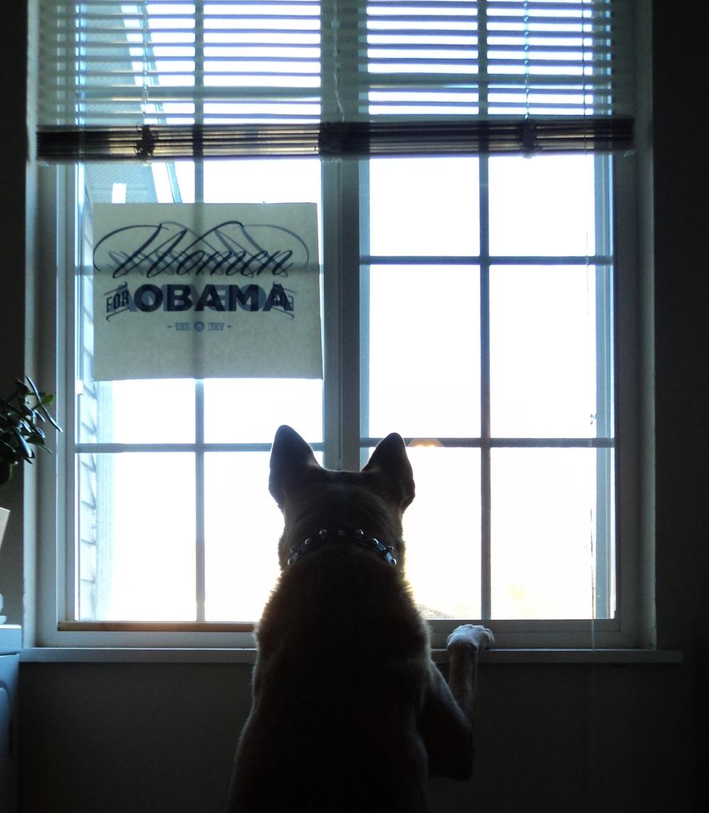 dog-at-window.jpg