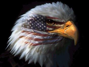 318495922_AmericanEagle_xlarge.jpeg