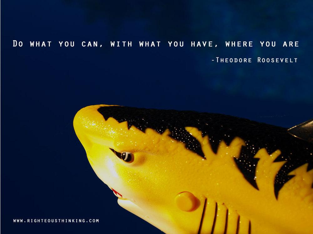rfmp_shark2.jpg
