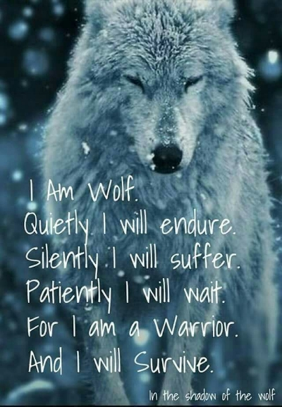 6c0b65ac1559e9a3600d59aed4da31c1--wolf-tattoos-wolf-tattoo-quotes.jpg