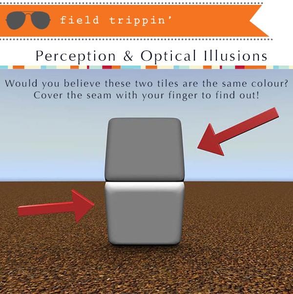 optical_illusion_sherwood_park_eye_exam_doctor_optometrist_glasses_frames_eyewear_style.jpg