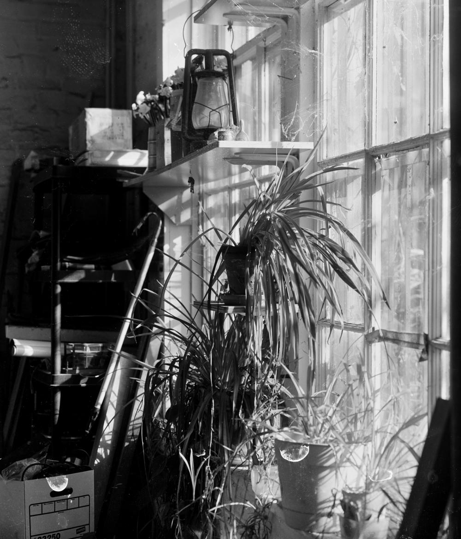 plants in window.jpg