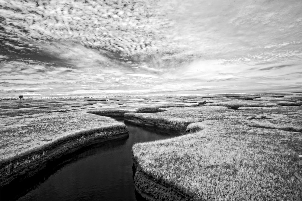 Aaron Sheldon - Bass Hole Salt Marsh.jpg