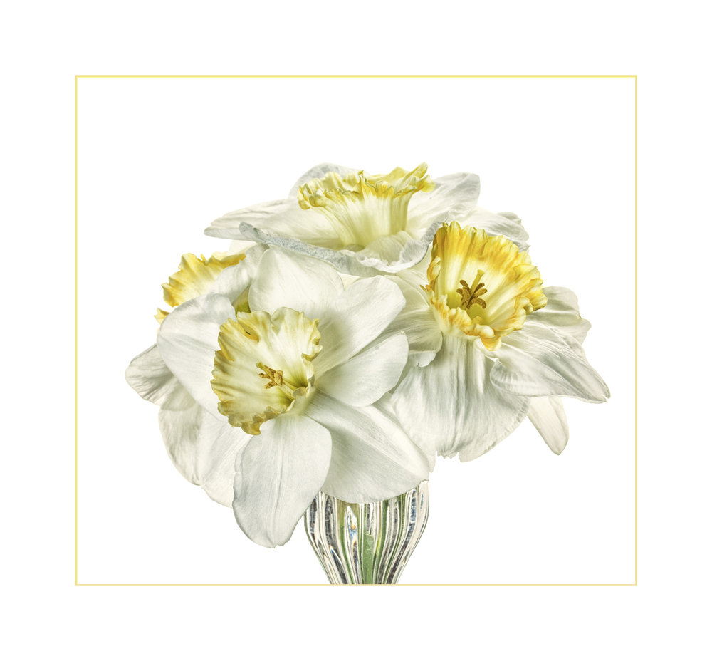 BartterD 81---- Daffodil Bouquet.jpg