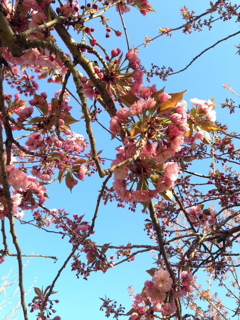 From Brooklyn Botanical Gardens