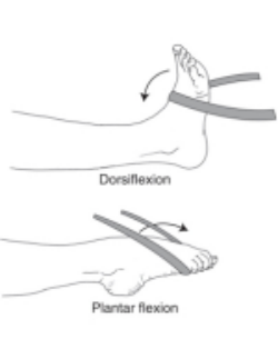 Ankle Dorsiflexion and Plantarflexion