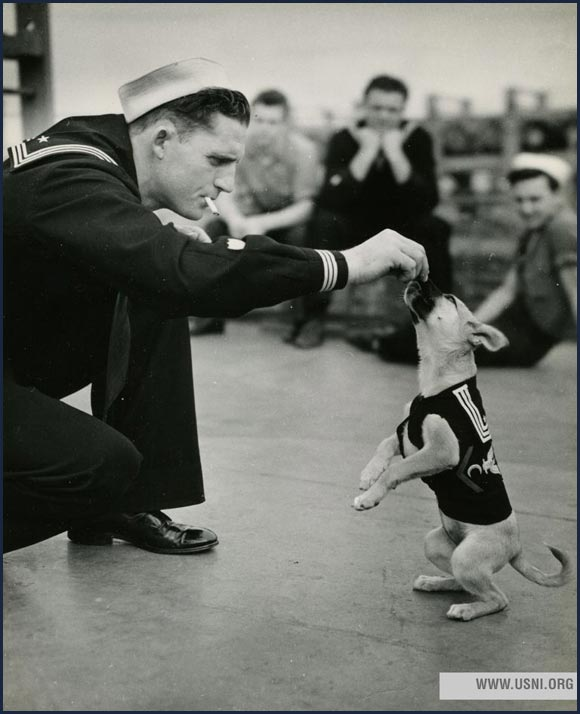 """Salty,"" the mascot of a Coast Guard destroyer escort, circa 1943."
