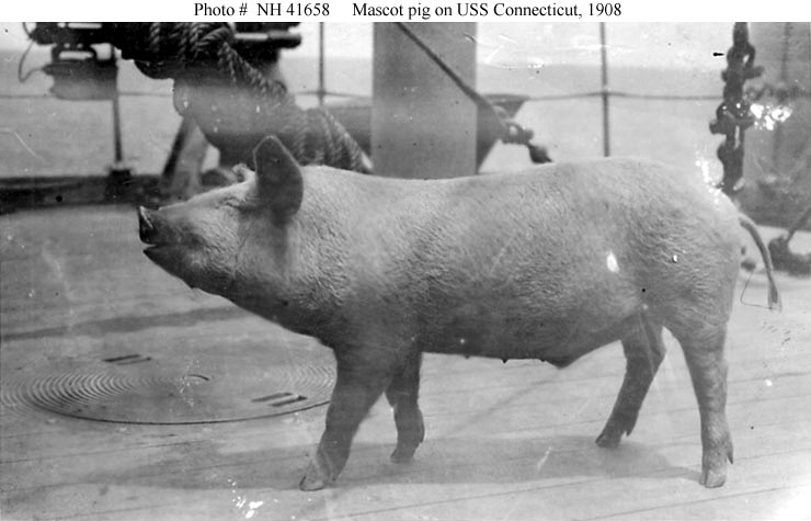 Pig mascot of USS Connecticut, circa 1908.