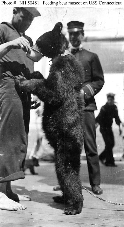 Feeding a bear mascot on board the USS Connecticut during the Great White Fleet cruise, circa 1908.