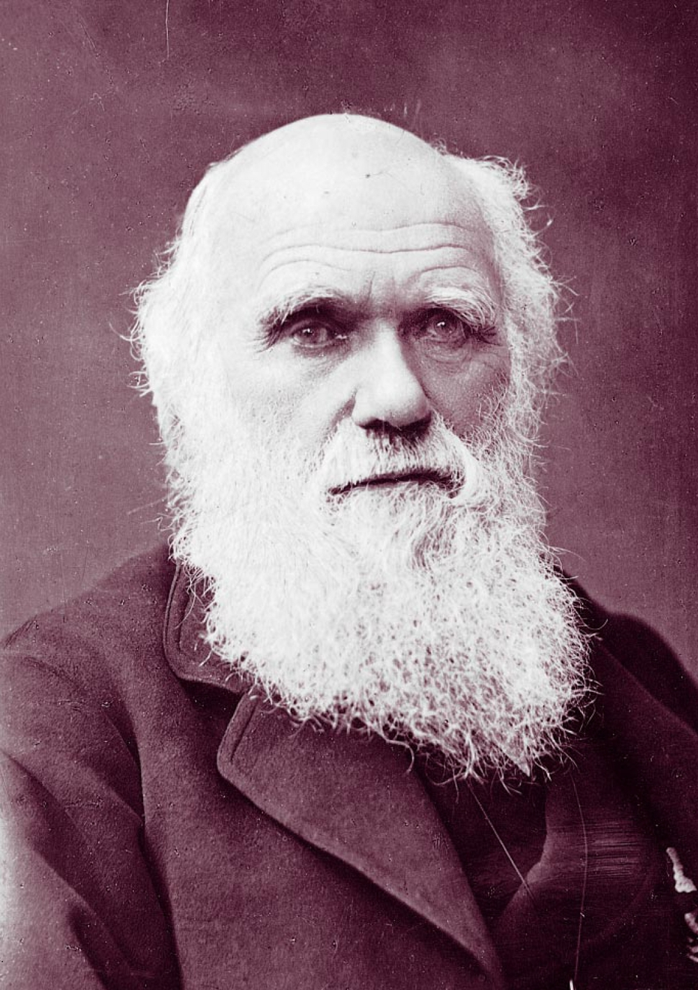A photograph of Charles Darwin from 1881. By Herbert Rose Barraud.