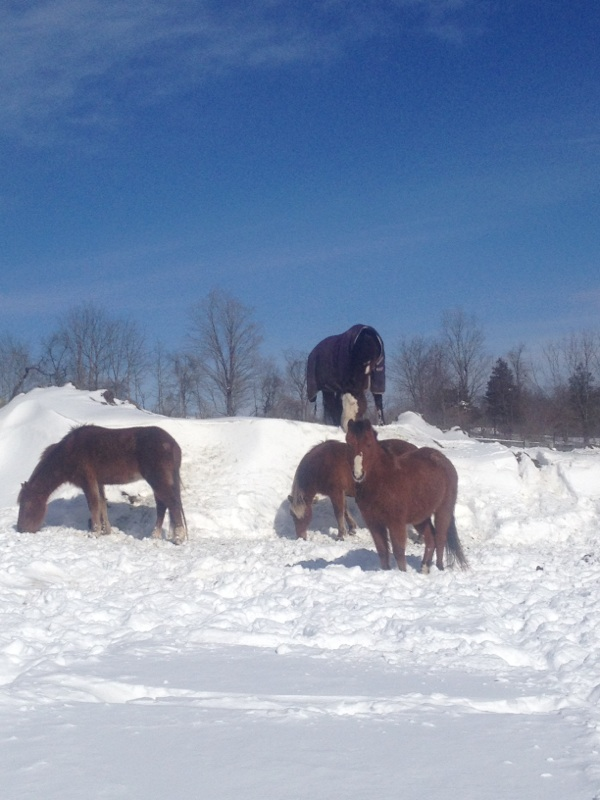 Ponies on Snow Mountain!
