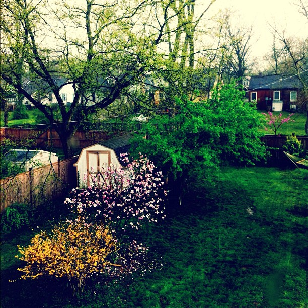 Spring showers (Taken with  Instagram  at Home)