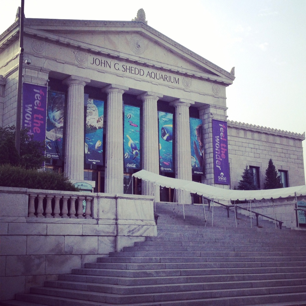 Shedd Aquarium Entrance