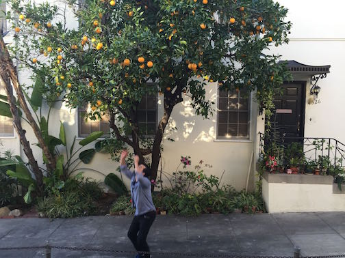 Jumping for Oranges