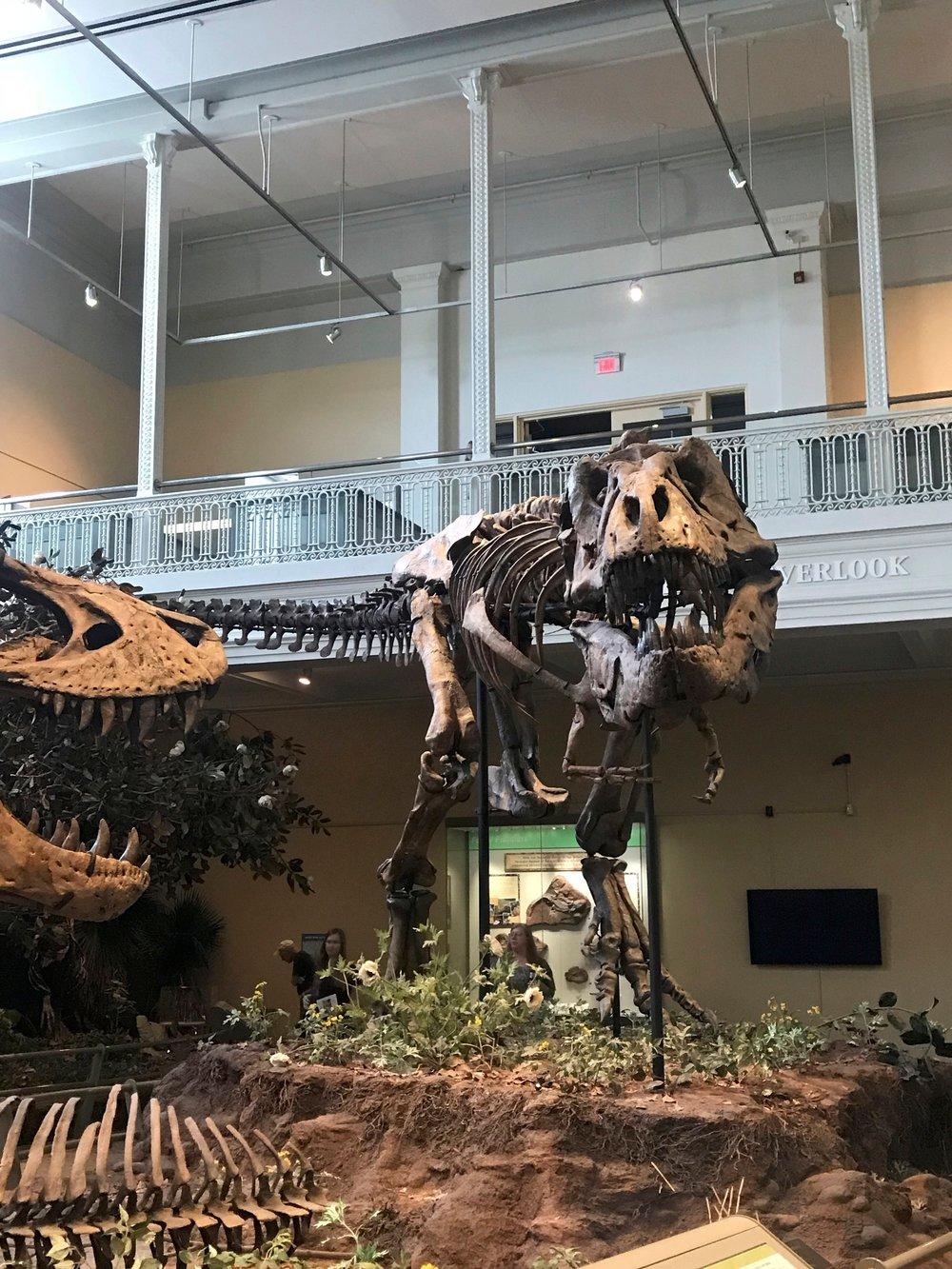 """T. rex in the """"wild"""""""