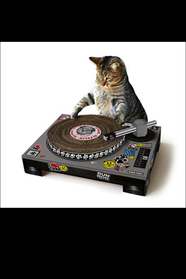 Please Please Please book this cat for our next CFIB Party. CAT PARTY USA