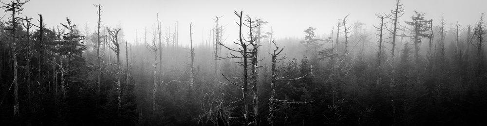 Trees 3 (1).jpg