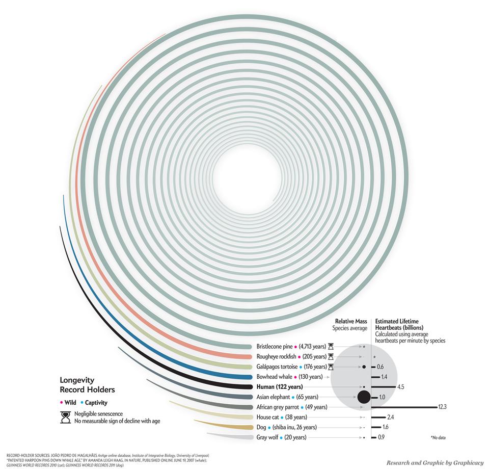 Graphic Science Longevity