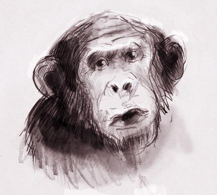 chimps-portrait.jpg