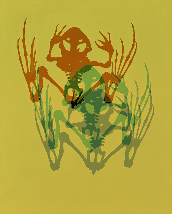 Skeleton, Frog