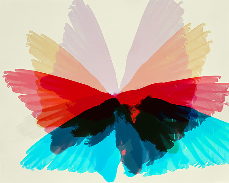 Wings, Woodpecker