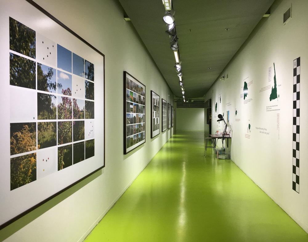 Open Land Art & Fact Team (O.L.A.F.T.) / Hyde Park Art Center