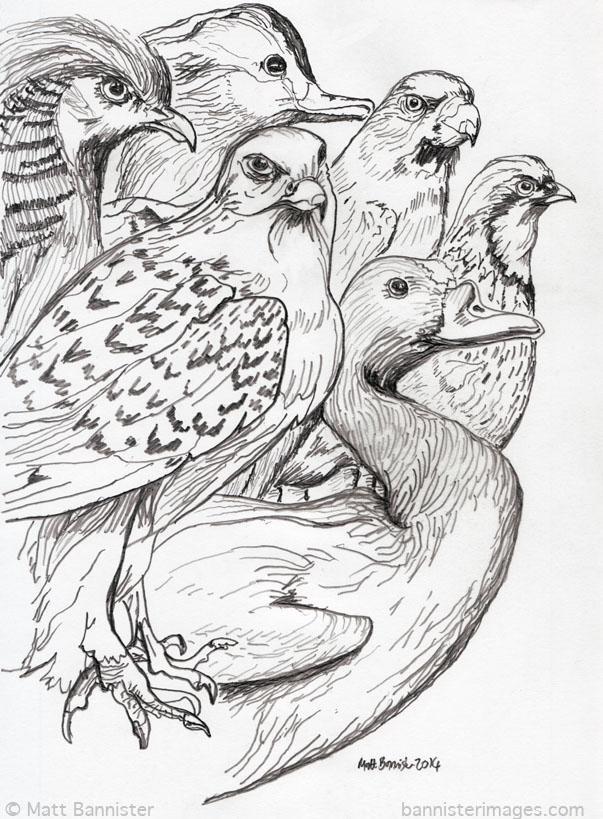 Horniman Birds tw.jpg