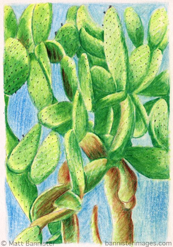 Modica Cactus.jpg