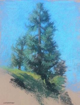 lundman_treestudiesPaloAlto1.png