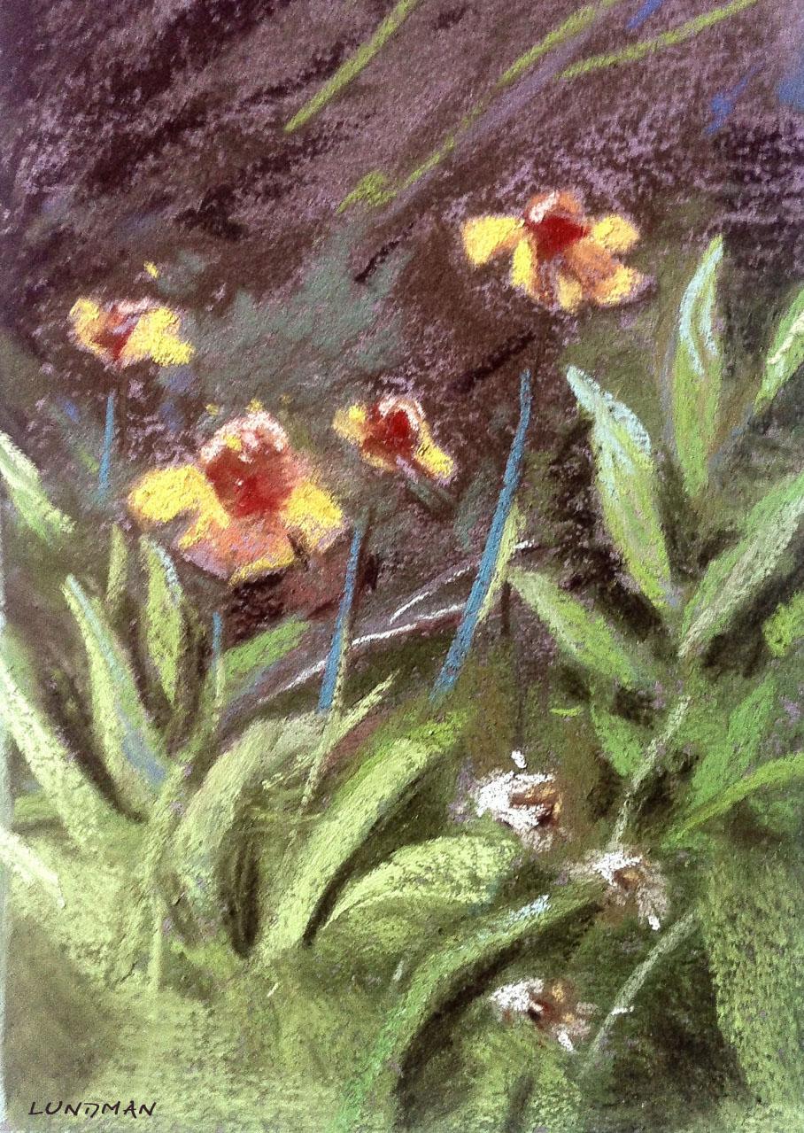 lundman_wildflowerstudy1.jpg