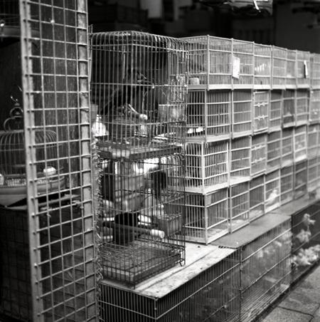 Bird Alley Study 02