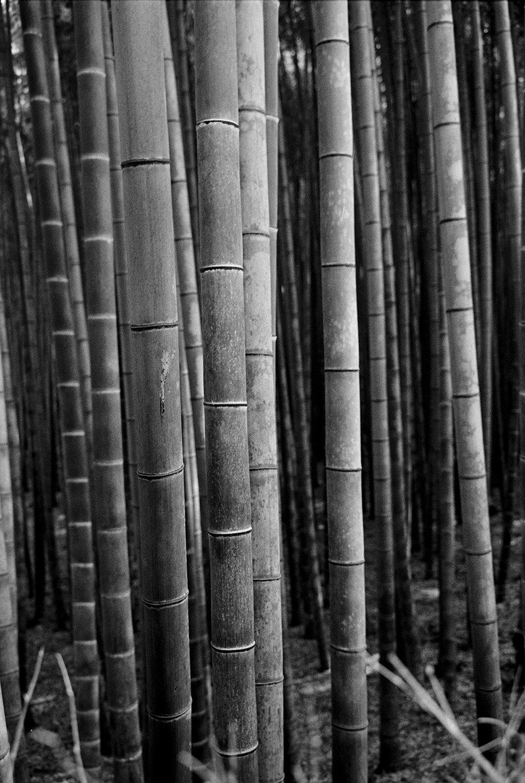 Arashiyama Study 01.jpg