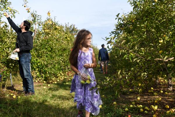orchard006.JPG