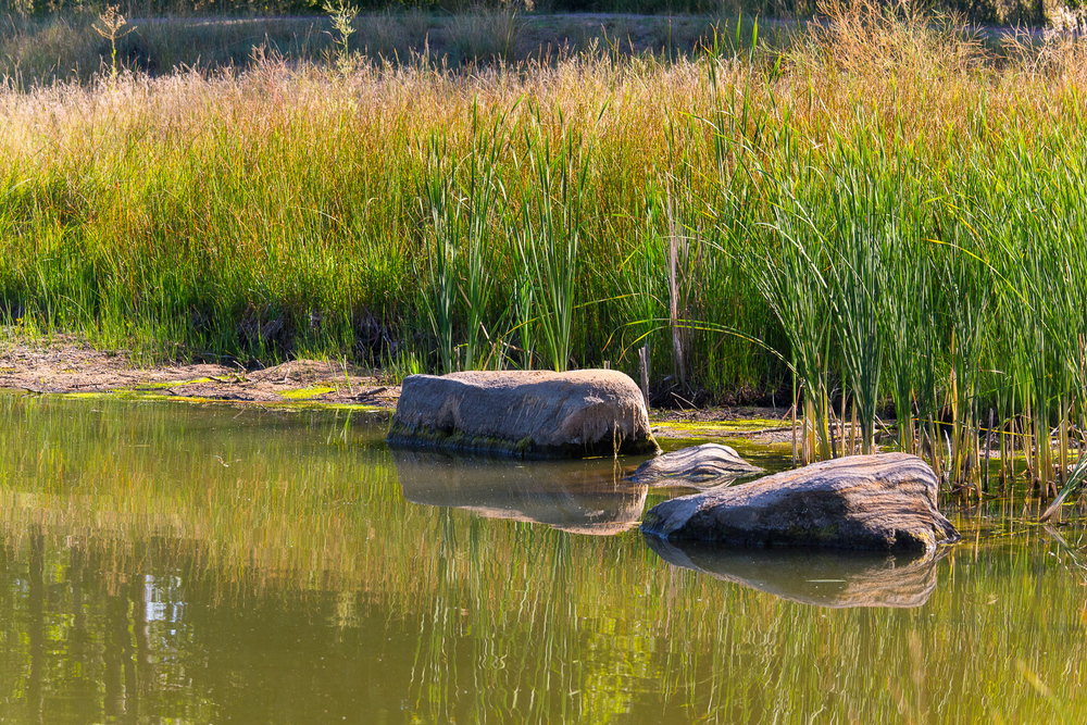 Jewell_Wetlands_Park_201409_12.jpg