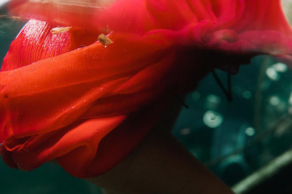 tulum-mexico-underwater-photography-03.jpg