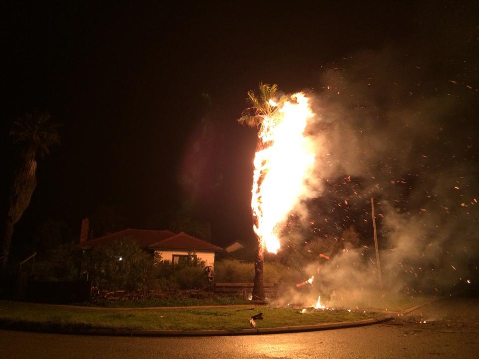 tree on fire rangeway