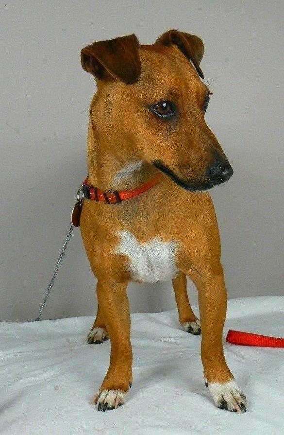Www Geraldton Dog Rescue