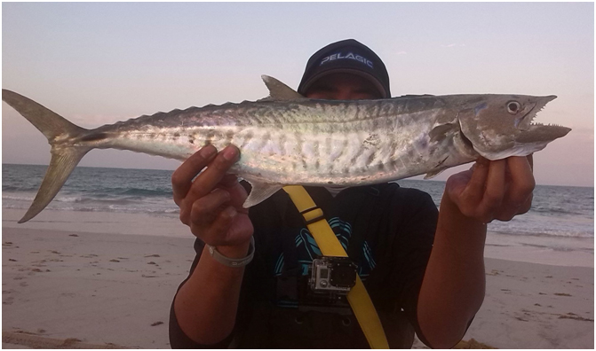 ROSNE WITH A NICE SPANISH MACKERAL OFF TARCOOLA BEACH