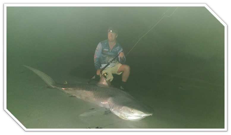 MICHEAL LANDED THIS 6' TIGER SHARK THIS WEEKEND IT WAS HIS FIRST TIME SHARK FISHING WELL DONE MICHEAL
