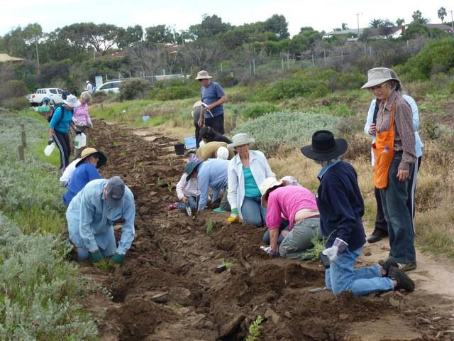 2014 Grants: Members of the Friends of Bluff Point and other volunteers work together to rehabilitate vegetation bordering the Chapman River Estuary.