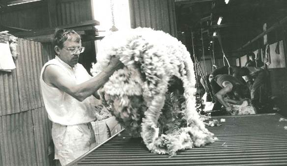 Darryl Grey at work shearing sheep
