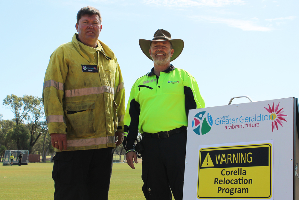 City of Greater Geraldton Rangers Darren Cole and Neil Ferridge during the training for the Corella Relocation Program.